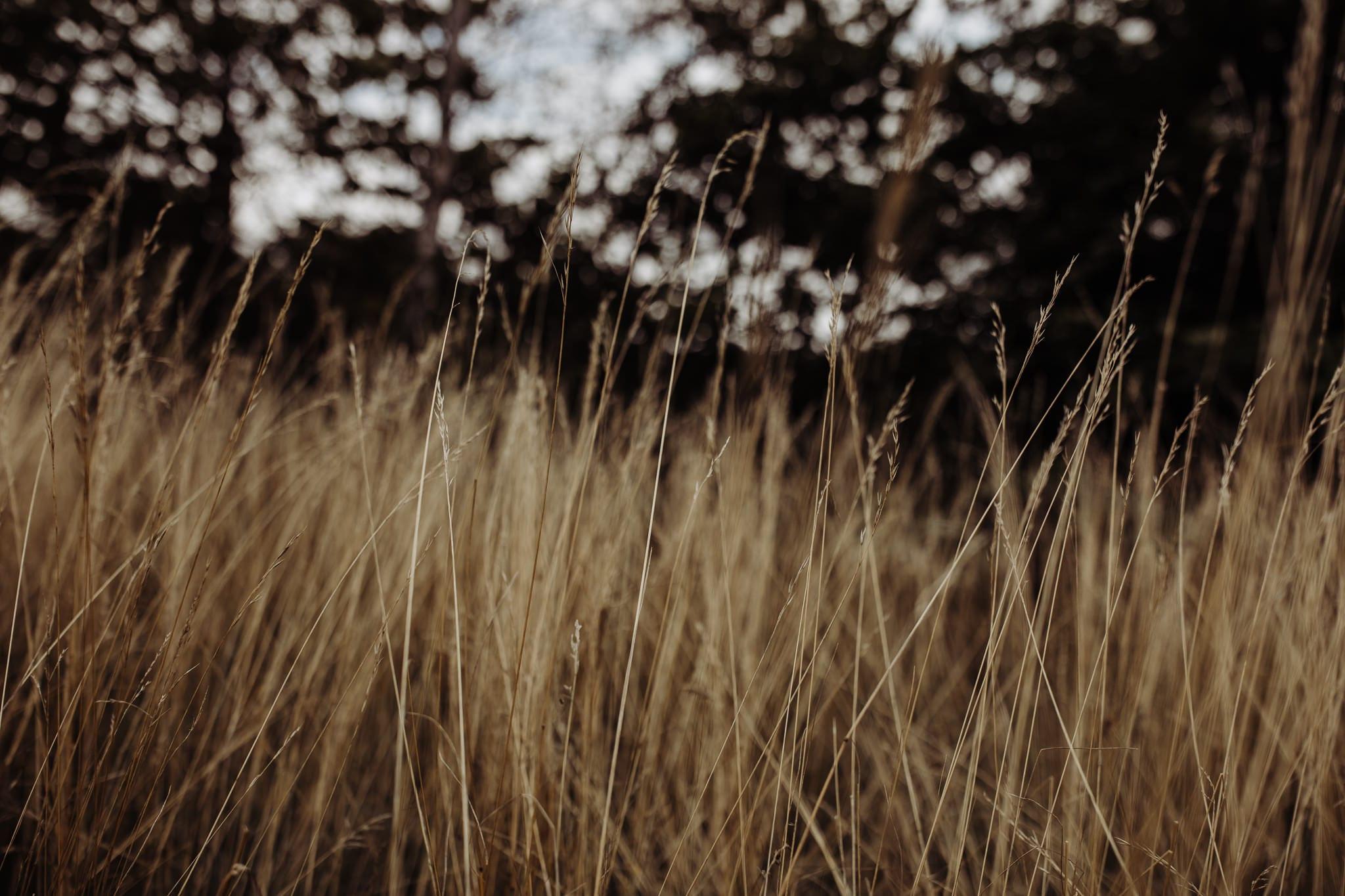 tall grass at a Cambridge countryside elopement