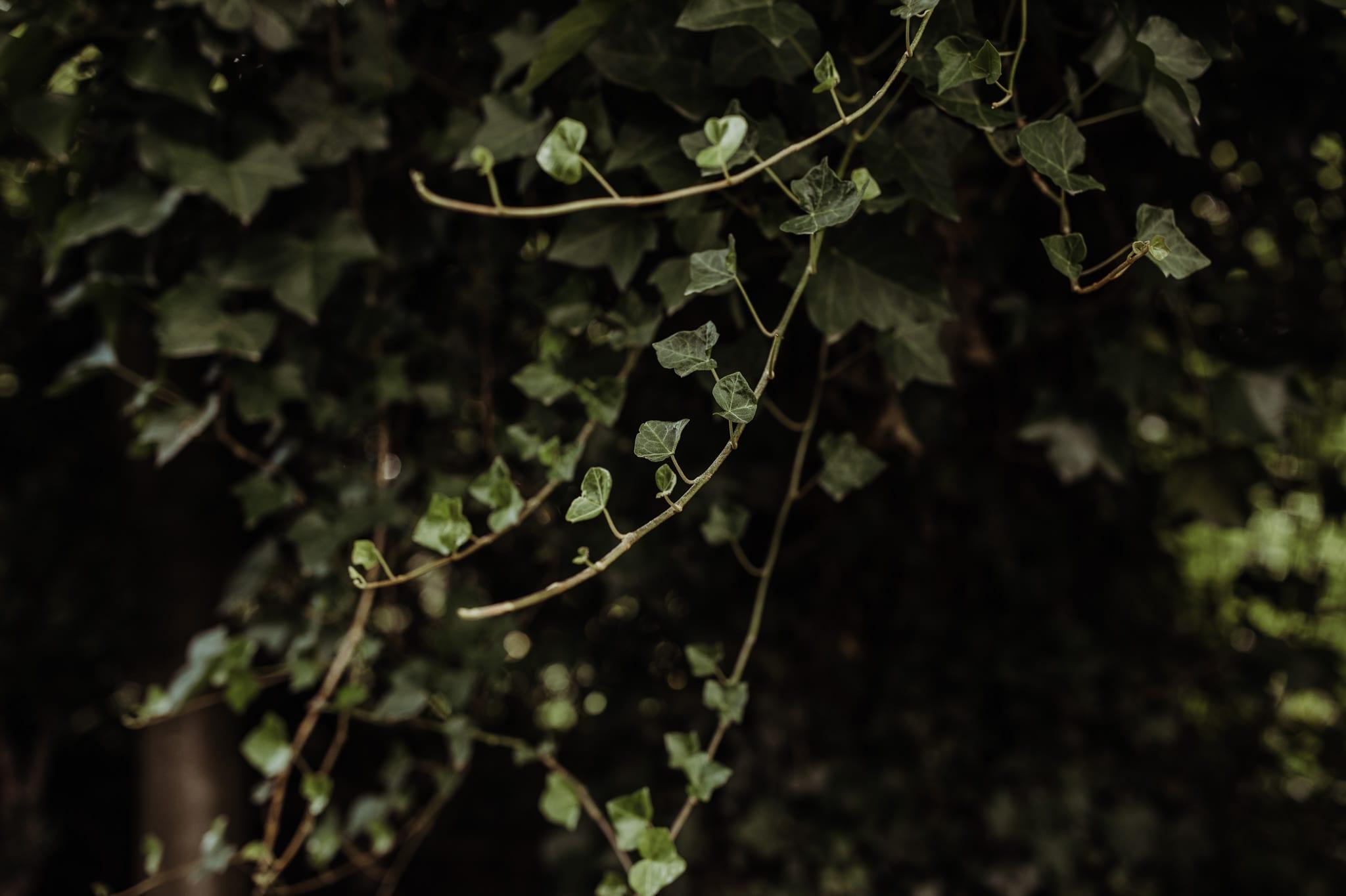 foliage details at at Wandlebury Park
